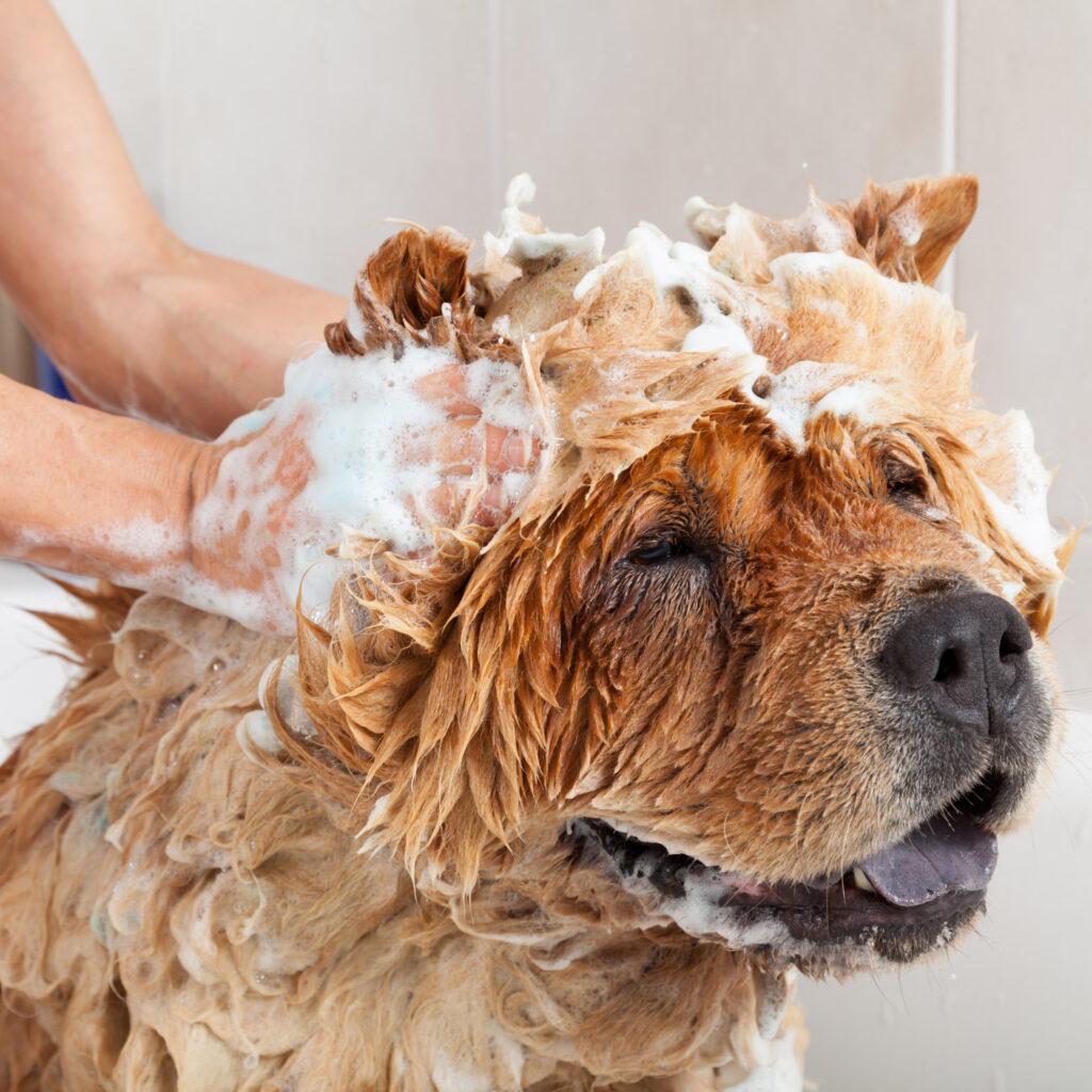 Jak kąpać psa?